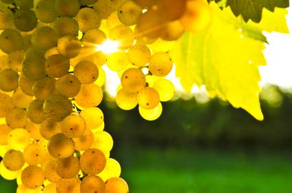 White-Wine-French-Wine-Explorers
